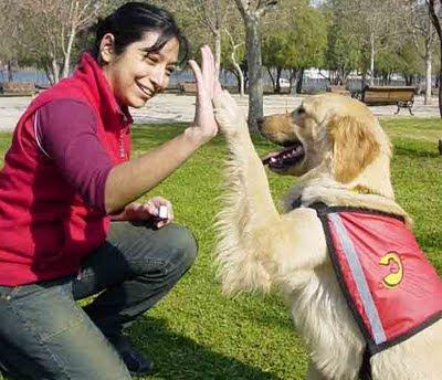 un perro adiestrado es un perro feliz