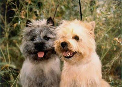 Adiestramiento Cairn Terrier