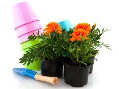 Plantas y flores plantas especies como cuidar las plantas for Como cuidar las plantas