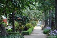 Málaga paseo del parque
