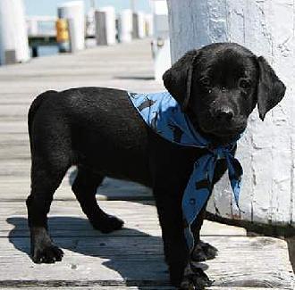 omw black dog