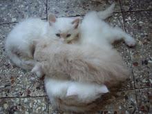 """""""Kittens cuddling"""""""