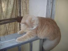 """Balancing Act"" on the house Balcony(Fri 27-11-2009)"