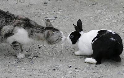 Oddest Animal Couples