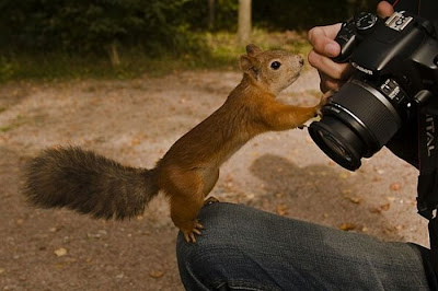 Animal With Camera Seen On www.coolpicturegallery.us