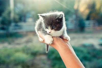 The Smallest Pets Seen On www.coolpicturegallery.us