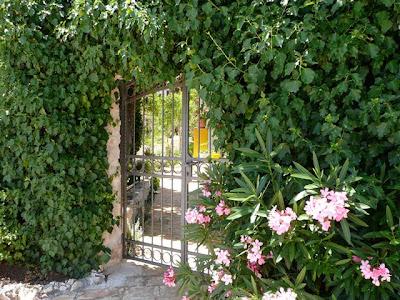 un giardino con edera ed oleandri (Hedera, Nerium Oleander)