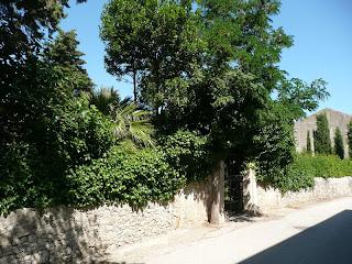 Giardini di Preko - profumi mediterranei: allori, melograni, pini, palme, cipressi…