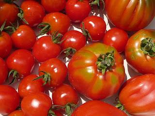 il Canestrino, Tomatoberry