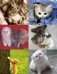 gatitos..