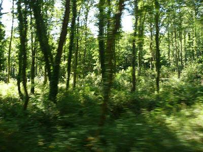 boschi di Chianni