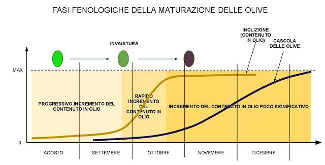 fenologia maturazione olive