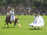 Caballo de paso peruano