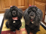 The Pampered Poodles