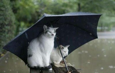 Nana 이동해: Kucing-Kucing Lucu