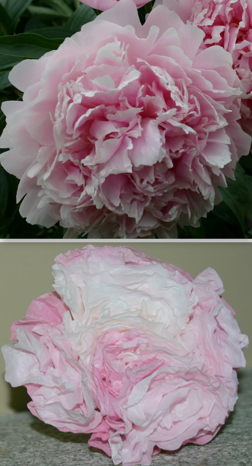 Paper Peony Roses Shine Your Light