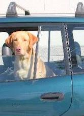 Multa de 1.200 euros a una mujer que dejó dos perros en un vehículo cerrado.