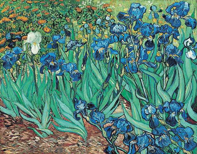 Piante di iris di Van Gogh