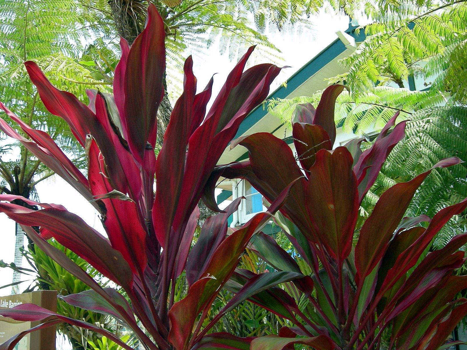 Tropical Far North Queensland 20 Atherton Tablelands