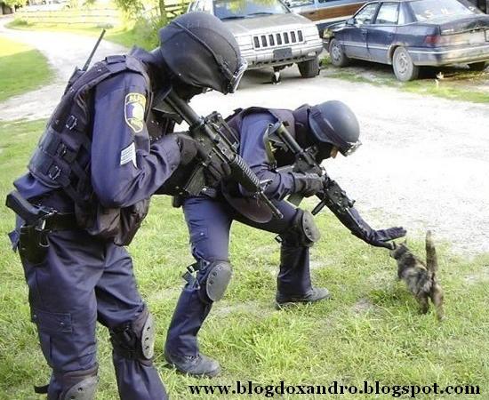 [gato-perigoso.jpg]