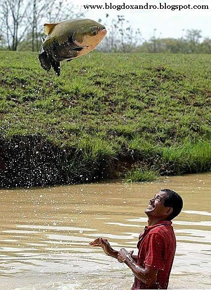 [peixe-voador.jpg]