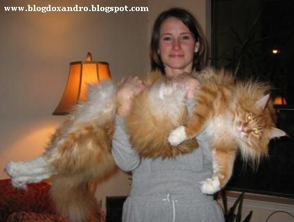 [gato-obeso.jpg]