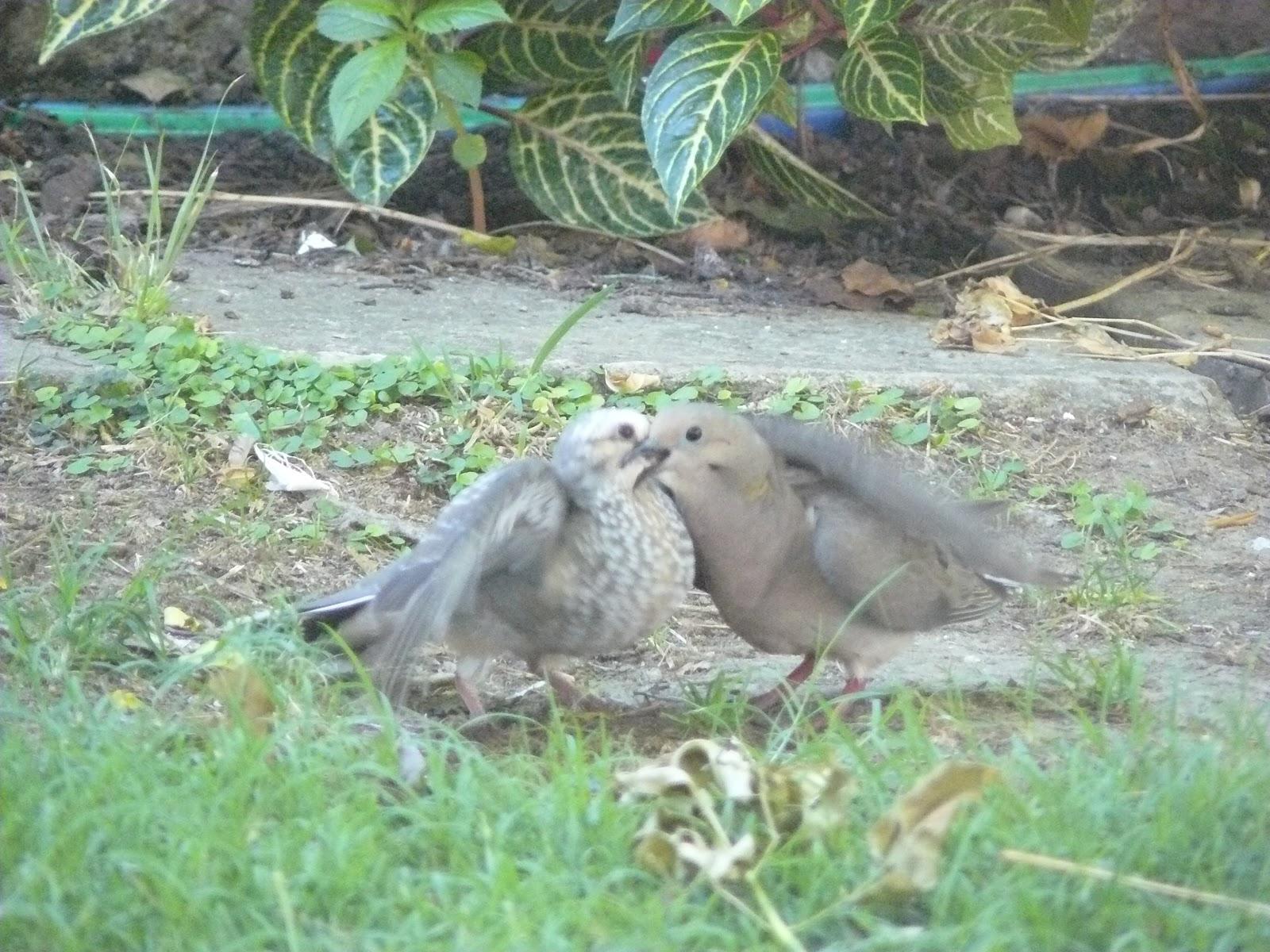 El jard n de emi p jaros en mi jardin for Aves de jardin