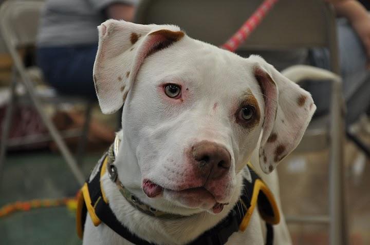 Peace Love & Dog Paws Rescue, Inc.