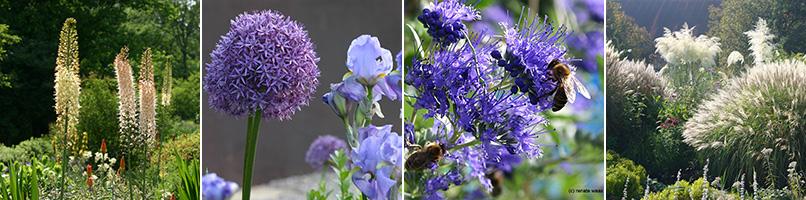gartenblog geniesser-garten : staudenbeet planen und anlegen, Garten seite