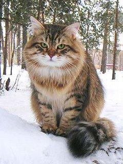 Сибирская 14 фото