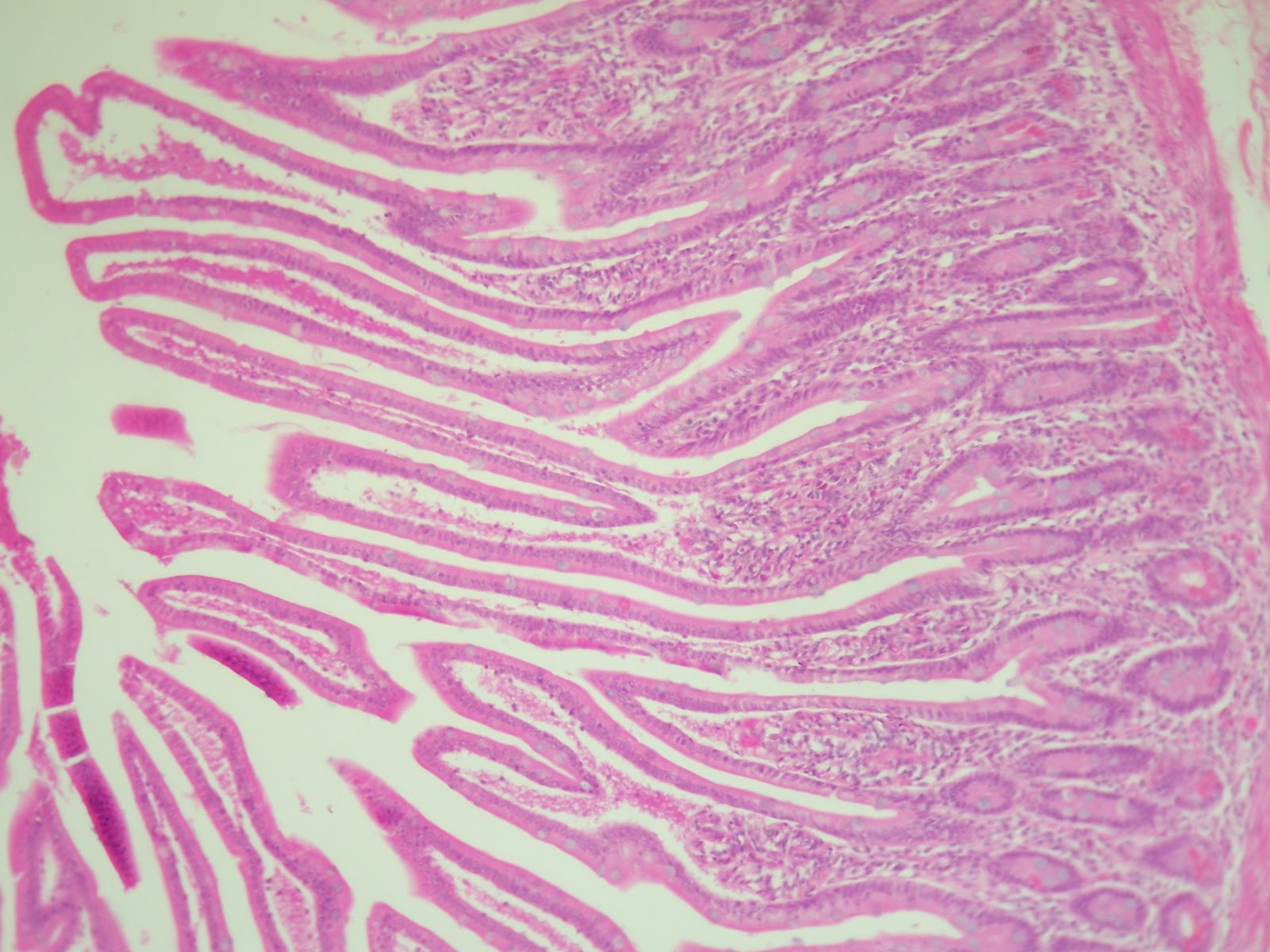 Medical Student Support System: Histology Slides