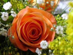 Rosas é vida