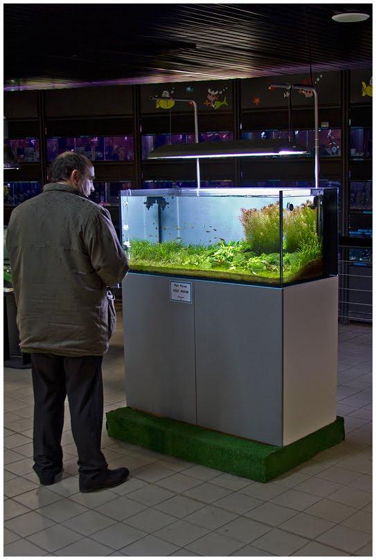 Faao aquascaping some pictures of elos system120 for Jardiland aquarium