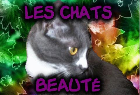les chats beautés