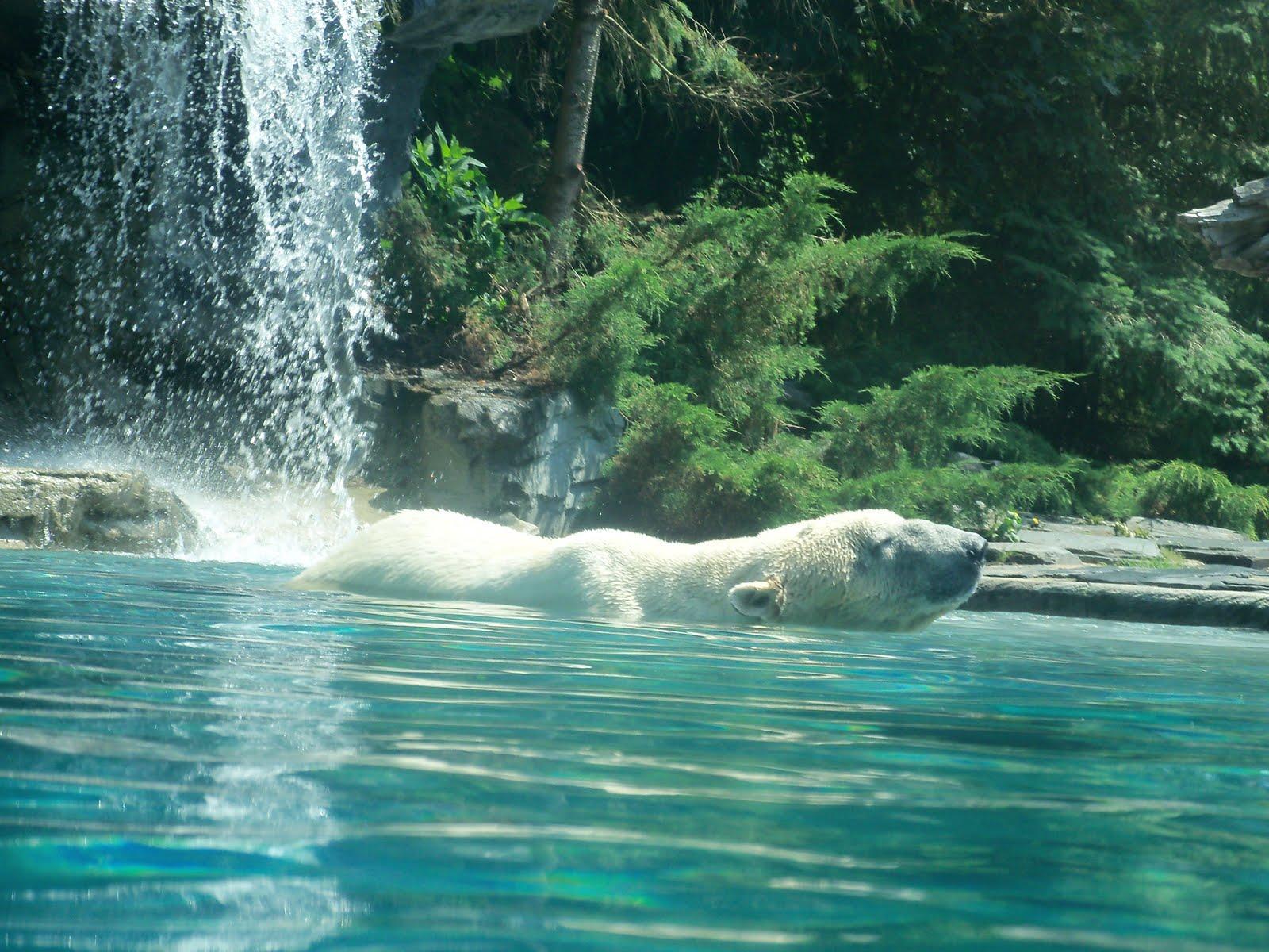 Le mond 39 am l ours polaire for Zoo haute normandie