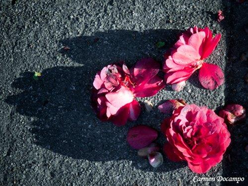 [flores2.jpg]