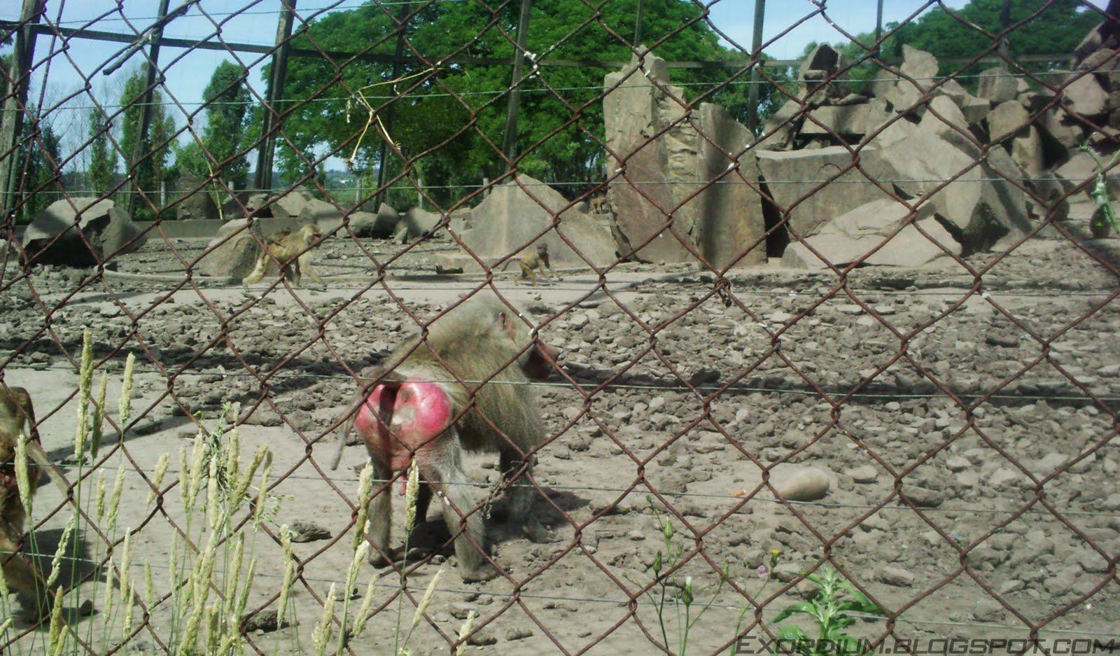 fotos de animales muy monos - Fotos de primates: monos, gorilas, lemures y orangutanes