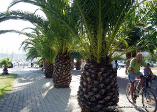 Palm trees in Hendaye