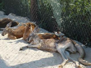 Potomac micmac la ferme zoo une histoire de tonton girafe for Dormant fenetre c est quoi