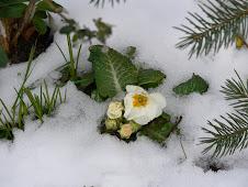 Immer noch Schnee...