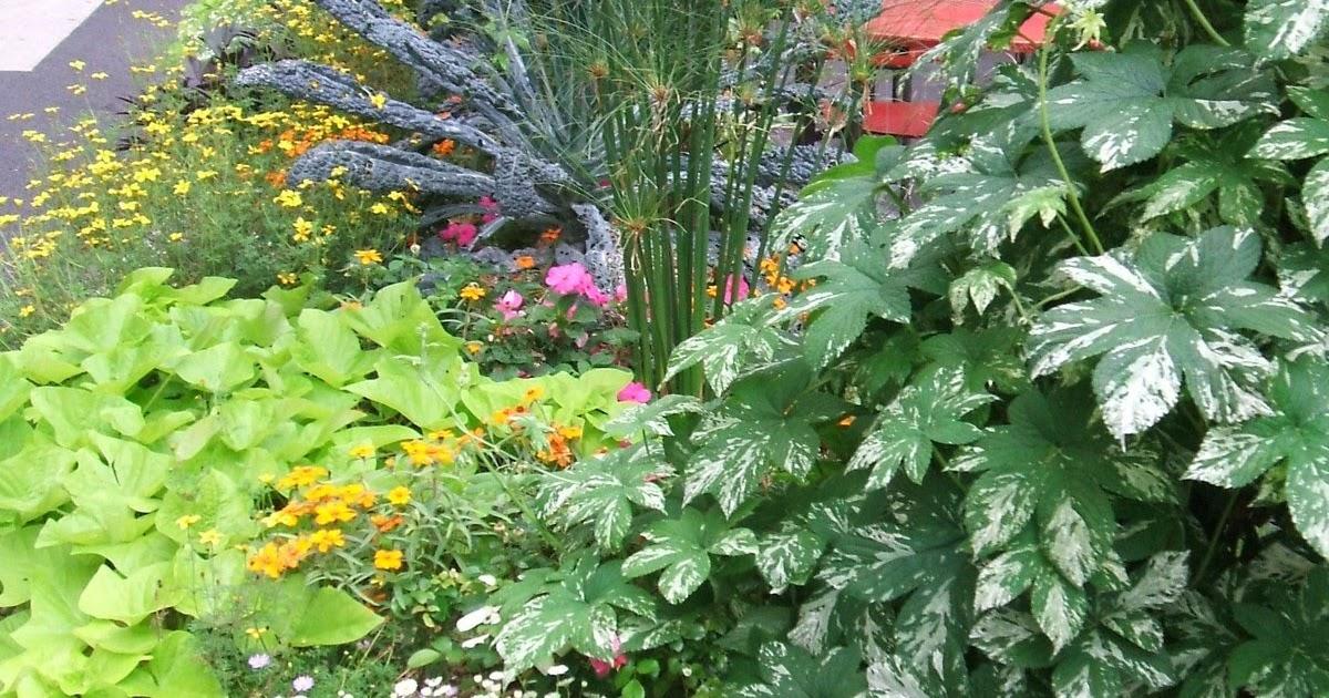 les piments le potager les fleurs et plantes de biosyrphe culture et multiplication des. Black Bedroom Furniture Sets. Home Design Ideas