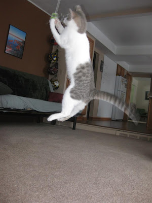 flying cat, kitten, jumping, string, leaping, catch