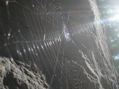 sun on spider web, rocky wall