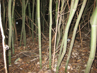 bamboo grove in west virginia, yellow grove bamboo