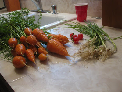 time to harvest the garden, onion, carrot, october