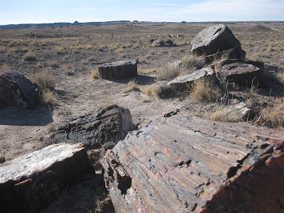 petrified trees, wood, petrified forest, national park, take