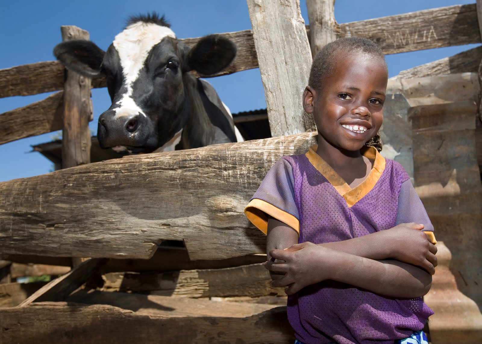 heiffer project The latest tweets from heifer international (@heifer) heifer empowers millions to go from poverty to self reliance via gifts of livestock, seeds, trees & training.