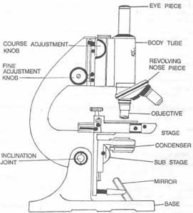 How to Label the Parts of a Compound Light Microscope | eHow.com