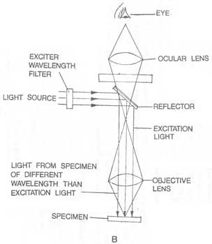What Are the Functions of Compound Light Microscope Parts? | eHow.com