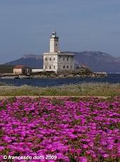 Olbia - Il faro fiorito